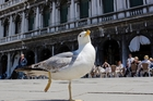 Google used cameras carried in backpacks in St Mark's Square and other parts of Venice. Photo / AP