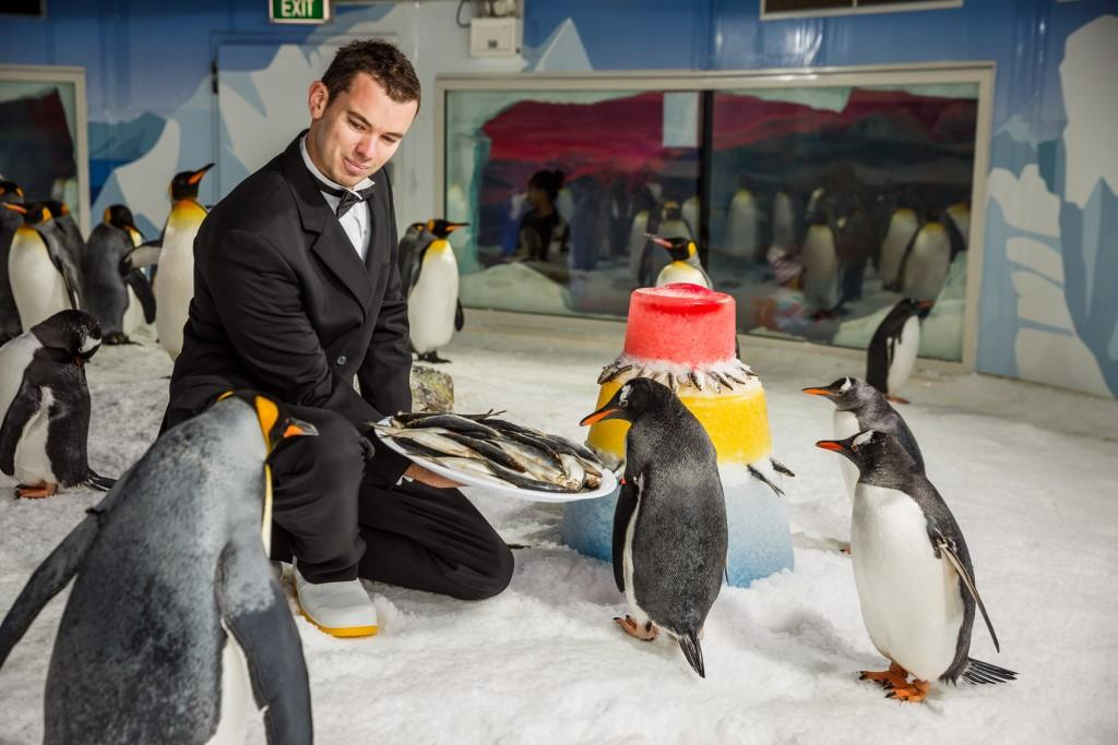 Over 70 penguins were treated to a sub-zero housewarming to mark them successfully settling into their new enclosure.