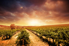 Australia's premier vineyards in Barossa welcome visitors for tastings and overnight stays. Photo / Getty Images