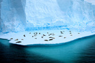 Visit the seals in Antarctica.