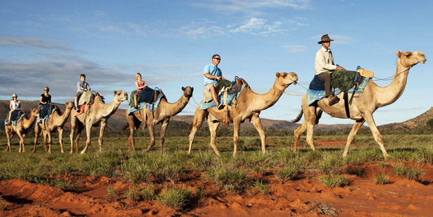 Exploring Alice Springs by camel. Photo / Supplied