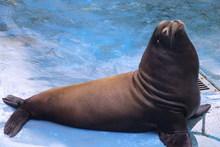 Makea the sea lion. Photo / Supplied