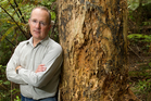 Labour MP Phil Twyford, with a kauri which has kauri dieback disease, says the Government should do far more to address the problem.  Photo / Richard Robinson
