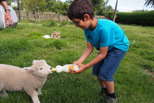 Within an instant of arriving at a Coromandel farm holiday, city kids are having fun. Photo / Supplied