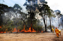 Extreme heat and lack of rain has made Australia a tinderbox.  Photo / AP