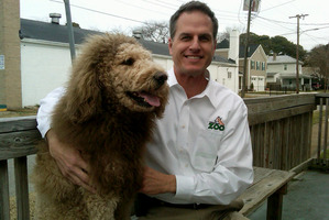 Labradoodle Charles the Monarch pictured here with Virginia Zoo director Greg Brockheim. Photo / AP