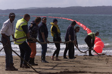 The Southern Cross cable comes ashore on Takapuna Beach back in 1999. Photo / Russell Smith