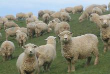 Grazing properties accounted for a 45 per cent share of all sales over the three months. Photo / Oamaru Mail