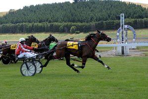 Photo / Race Images