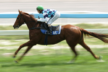 Durham Town won't mind the track conditions in the Trentham feature today. Photo / APN