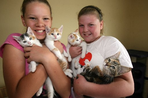 ORPHAN FELINES: Poppy Wilkins, 11 (left), and Melissa Rolls, 11, both of Masterton, with kittens needing homes at the Wairarapa SPCA, which is bursting with unwanted cats and kittens. The three white kittens were found dumped in a Masterton carpark when t