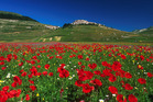 Photo / Stefania Servili, Castelluccio