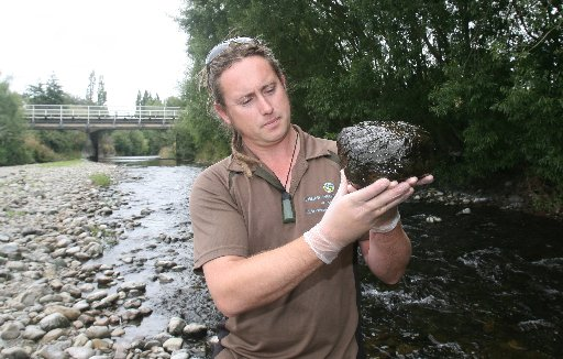 TOXIC: Greater Wellington Regional Council environmental monitoring officer Brett Cockeram with algae in Waipoua River, Masterton.