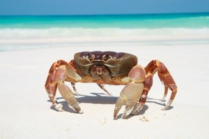 Researchers have created a robot that mimics the movements of a crab. Photo / Thinkstock