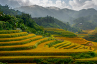 Rice terraces near Sapa town. Photo / Thinkstock