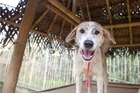 Workers say caring for the dogs at Barc is sometimes its own reward.
