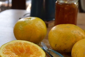 Leave grapefruit to ripen on the tree for up to 14 months to draw out their sweetness. Photo / Meg Liptrot