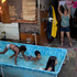 Kids play in a portable pool as a woman hangs clothes to dry outside a home in the Varginha area of the Manguinhos slum complex where Pope Francis will visit next week. Photo / AP