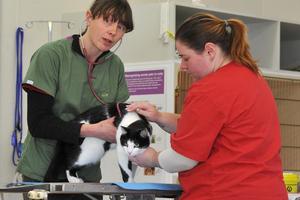 Vet Dr Verona Mitchell (left) and vet nurse Carina Gough check cat Frankie at Otago Polytechnic's Veterinary Nursing School. Photo / Craig Baxter