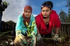 Fatima Jacobs (left) and Sophie Edwards are two of the teenage mothers learning to grow vegetables. Photo / Brett Phibbs