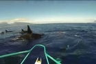 Dozens of killer whales swim around a fishing boat for about ten minutes near Tahiti, a rare sight in the region.