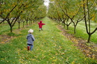 On the orchard.