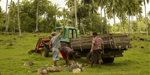 From collection to processing, making coconut oil for export in Samoa provides jobs.