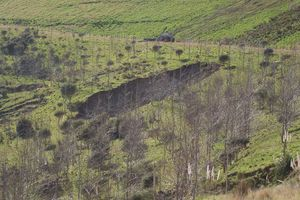 A sinkhole has appeared on the eastern wall of the backfilled Golden Cross open pit. Photo / APN