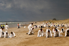 Volunteers and territorials dressed in white Tyvek suits clean up on Papamoa Beach. Photo / Alex Monteith