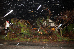 A fallen tree blocks the footpath on Pharazyn Street during a storm in Lower Hutt. Photo / NZ Herald