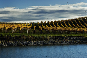 Yealands Estate - New Zealand's single largest privately owned vineyard.