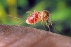 Mosquitoes carry malaria.