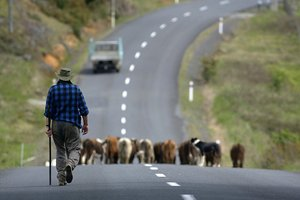 Farmers, Fonterra's shareholders, are absolutely ropeable over the botulism scandal. Photo / NZ Herald
