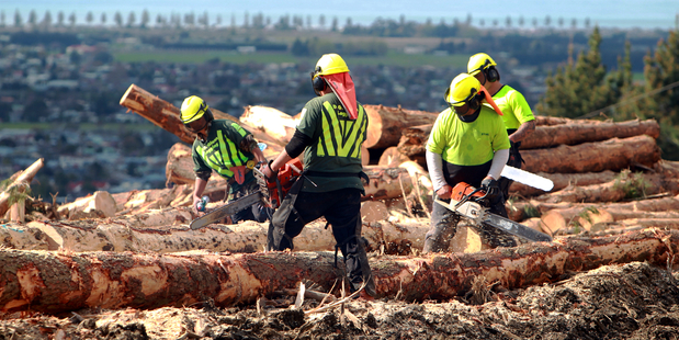 Forestry workers suffer daily fatigue equivalent to that of a marathon runner. Photo / Glenn Taylor
