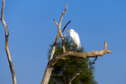 An egret perches on a tree in Kakadu National Park. Photo / Thinkstock