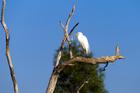 An egret perches on a tree in Kakadu National Park. Photo / Thinkstock