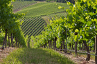 The beautiful Adelaide Hills vineyard. Photo / Thinkstock