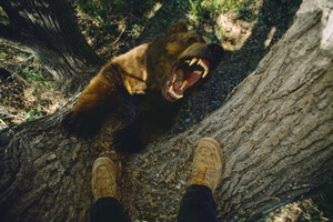 A treed photographer's-eye view of a grouchy grizzly.