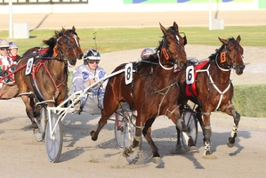 Cheer The Lady (No8) will still be favourite despite a bad draw in her Breeders Crown final on Sunday.  Photo / Stuart McCormick