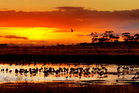Lakeside Habitat Sunset Australia. Photo / Getty Images