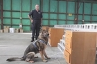 Cash detector dogs, newly trained to sniff out illegal dosh, showed off their new skills at the Police Dog Training Centre in Upper Hutt this morning.