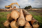 Logging is big business in NZ, with 330 contracting operations throughout the country. Photo / Natalie Slade