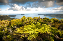 The Waitakere Ranges are hugely appealing to nature lovers. Photo / NZ Herald
