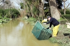 Whitebaiter John King adjusts his net in this 2008 photograph from Wanganui's Kowhai Park. PHOTO/ FILE