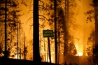 Fire crews are clearing brush and setting sprinklers to protect two groves of giant sequoias in Yosemite National Park from the Rim fire. Photo / AP