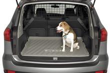 Dog in a Subaru Photo / Supplied