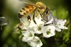 Bee prices and the number of beekeepers are rising - the exact opposite of an industry in steep decline.