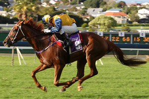 Veyron kicked off his Sydney campaign in fine style with his win at Warwick Farm on Saturday. Photo / NZPA