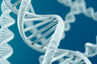The finding, made after DNA samples were taken from each of the three species and examined over a year in the United States. Photo / Thinkstock