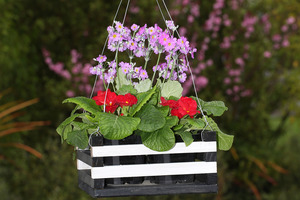 Hanging baskets can brighten up bare-looking areas outside your home. Photo / Getty Images